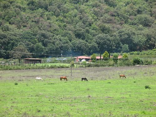 viaje rural geotagged mexico caballo caballos camino tepic nayarit sanjuan cerro montaña noria xalisco lanoria cuarenteño geo:lat=21487475 geo:lon=104994144
