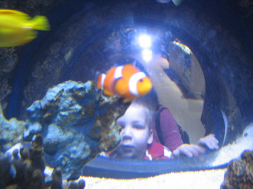 Matt undersea