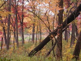 Nov08 Morton Arboretum 4
