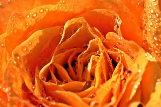 droplets in orange :-))))