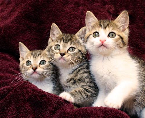 关于小猫很可爱的相片
