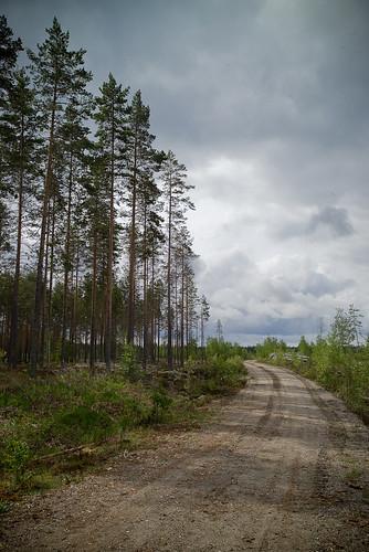 gps metsä geotagging ilomantsi