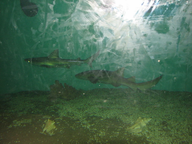 Image Result For Niagara Falls Aquarium