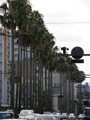 palm tree avenue