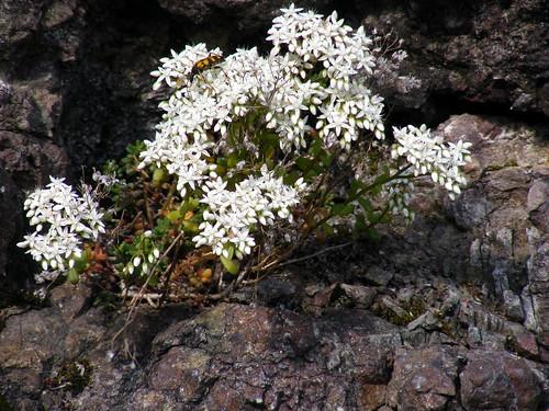 Valbiandino fiori