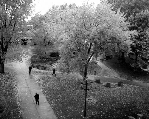 cameraphone autumn blackandwhite bw tree fall monochrome rain minnesota campus university samsung sidewalk fallingleaves mobilephone scsu centennialhall stcloudstateuniversity stcloudmn platinumheartaward samsungplsm520 october222008 plsm520