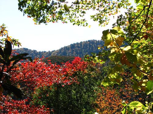 Fall foliage Chattanooga