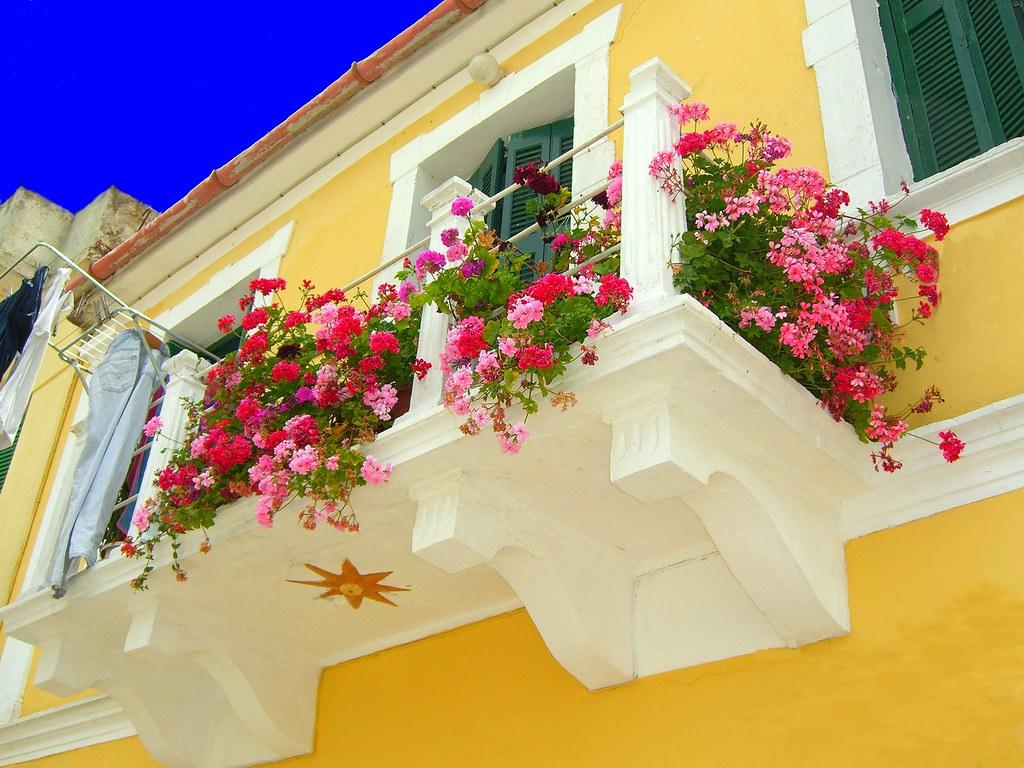 Ампельные цветы на закрытый балкон..