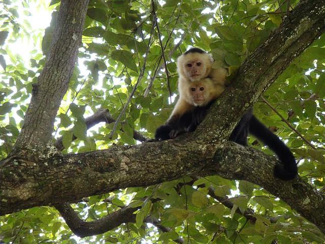 2 cute monkeys | Flickr - Photo Sharing!
