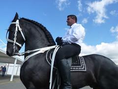 Giardini-Naxos (Me) - Frisian Horse