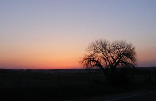 sky tree silhouette rural sunrise landscape dawn colorado driving scenic fujifilm plains lonelytree elbert finepixs700
