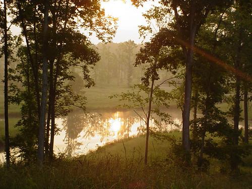 lake moss sunsets