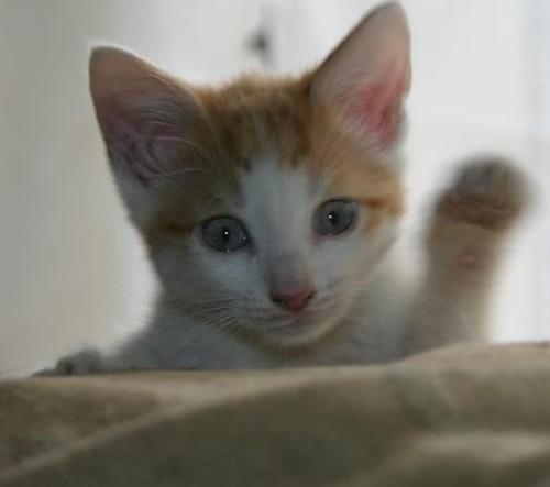 Bildergebnis für cat is waving