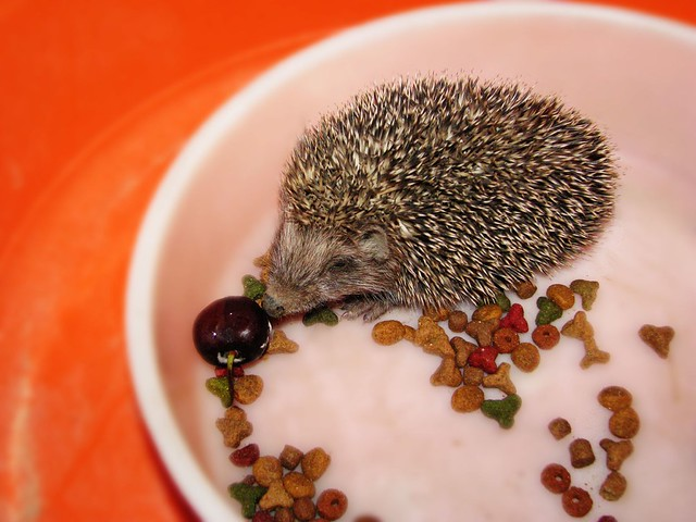 how to look after hedgehogs in your garden