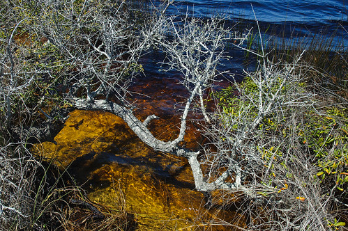blue lake gold florida deadtree walton graytonbeach highway30a