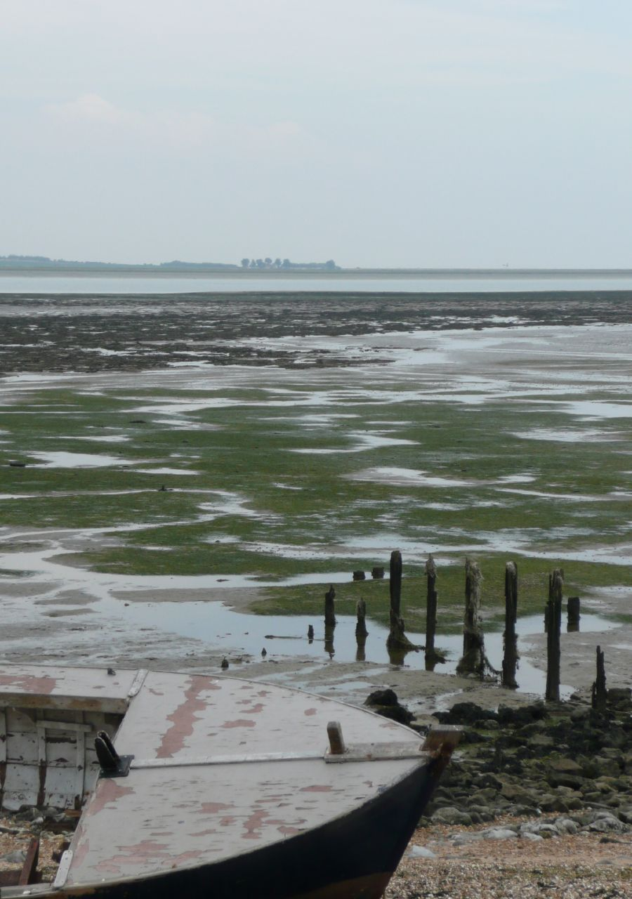 Book 3, Walk 12, Faversham to Whitstable Beached. 26 July '08.