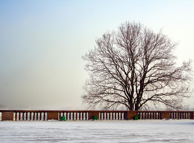 Tree at winter city