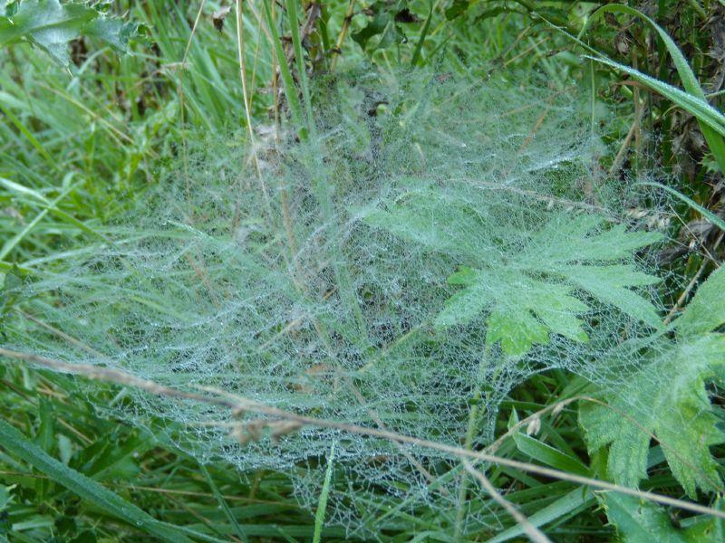 Cobweb Wadhurst circular