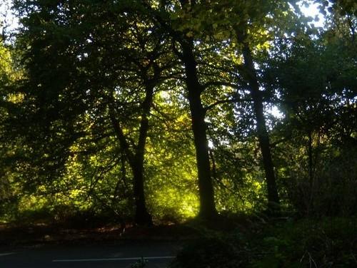 Sun though trees