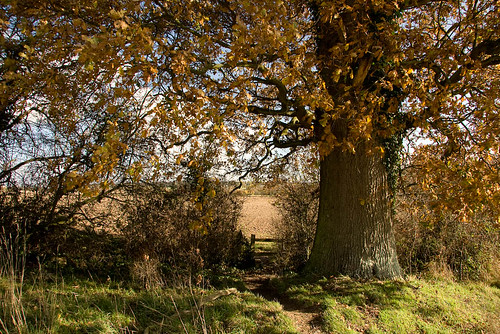 Kent in the Autumn