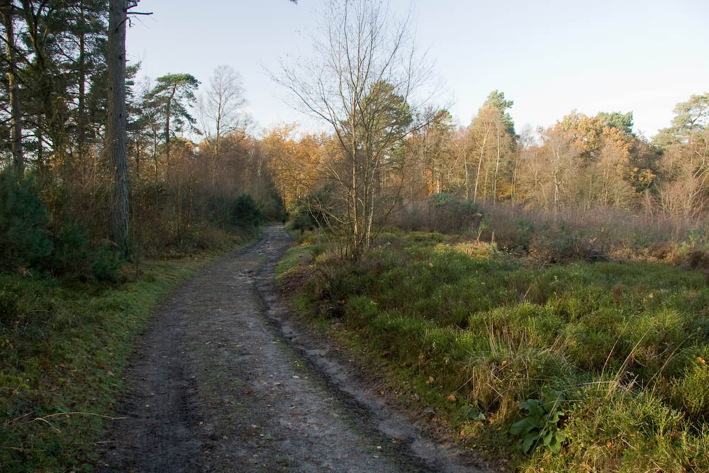 Black Down Following the Sussex Border Path