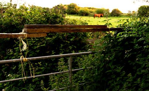 gate, N6, Galway