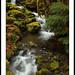 © Duckabush.032109.1F by Digital Sasquatch