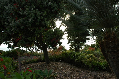Trees and red flowering plants backlit on the little hill at the garden's end, rich, palm fronds, Meditation Garden - Self-Realization Fellowship, Encinitas, California, USA by Wonderlane