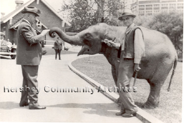 Milton Hershey and elephant, ca.1935