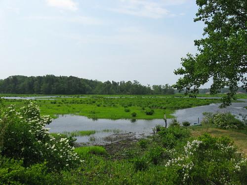 newjersey marsh mauriceriver naturallandstrust peekpreserve