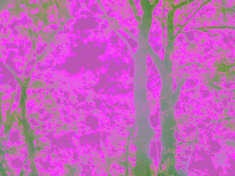 Tripped out trees My old, broken, camera only does purple and green, Groovy! Lets hope I tire of it before you do. Hurst Green to Chiddingstone Causeway