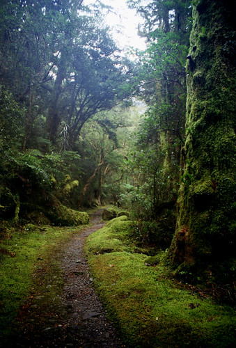 anoldent's photo of the Milford Track.