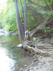 Mossprae Falls 057