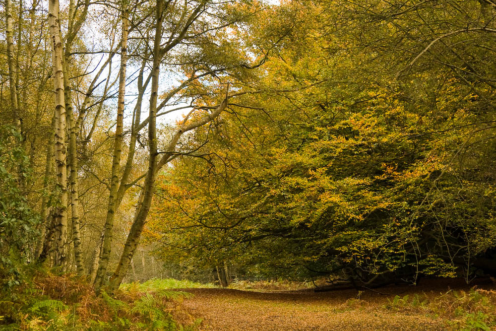 Abinger Roughs Abinger Roughs, above the hamlet of Abinger, is an area of woodland with scrub, grassland, beech, conifers and a nature trail. Its name refers to the area's former use as rough pasture land