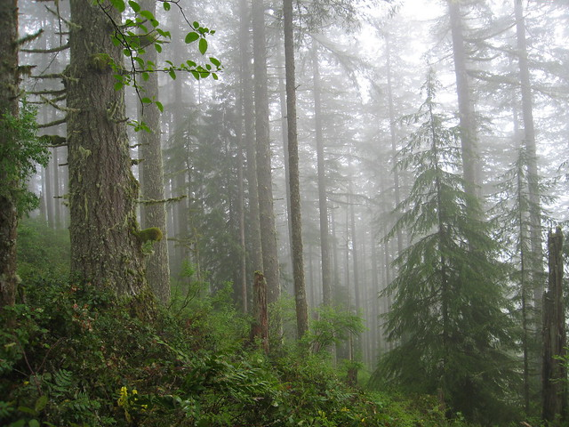 asian rainforest when raining