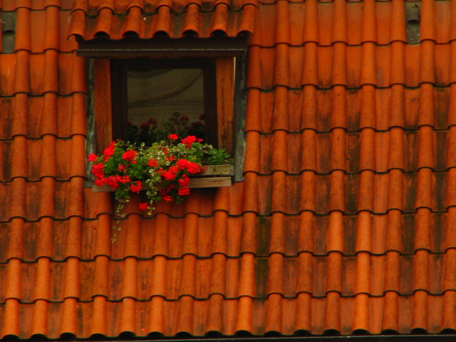 Flowered window in Prague