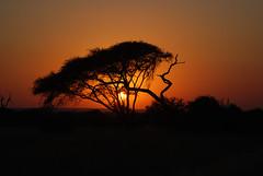 AFRIQUE DU SUD PARC KRUGER PARK SOUHT AFRICA