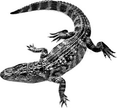 animal, animal figure, crocodile, reptile, fauna, scaled reptile, alligator, illustration, crocodilia,