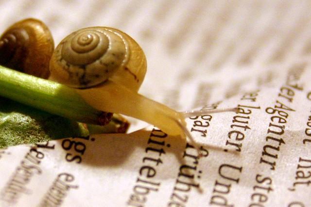 Merry lettuce snails IV