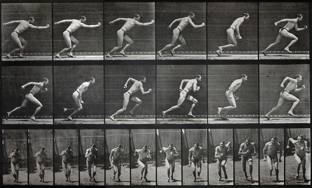 Eadweard Muybridge - Animal Locomotion Series, Plate 59, 1… | Flickr ...: www.flickr.com/photos/photohistorytimeline/3039881400