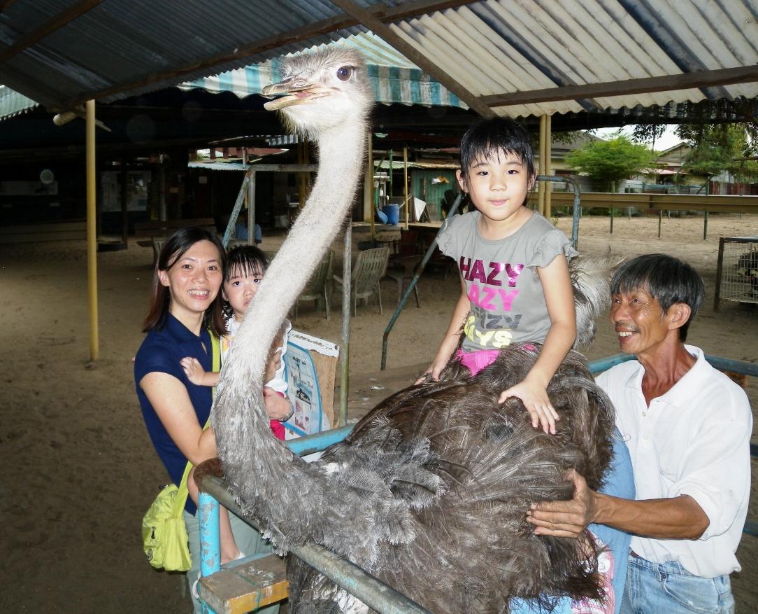 Ostrich farm at Desaru, Johor