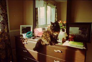 cat Shura