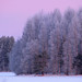 Very cold morning. by Vaeltaja