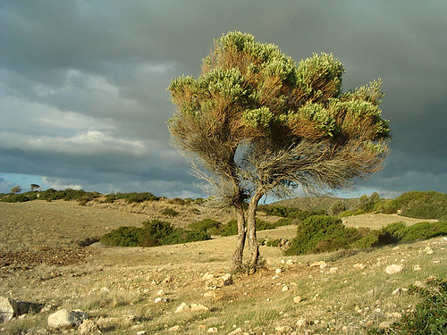 sky tree clouds landscape countryside cyprus akamas fpc platinumheartaward artofimages