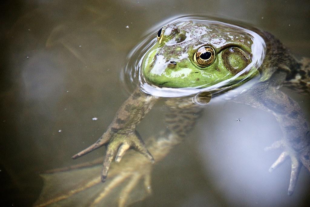 Frog in Ithaca