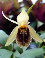 flower, yellow, macro photography, flora, close-up, cypripedium, ophrys,