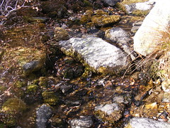 stream, leaf, water, nature, tide pool, geology, wilderness, rock, wildlife,