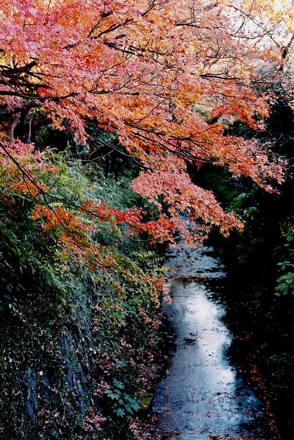 Photo:Autumn @ Kamakura By Guwashi999