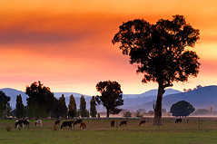 Corryong, Victoria, Australia IMG_8028_Corryong