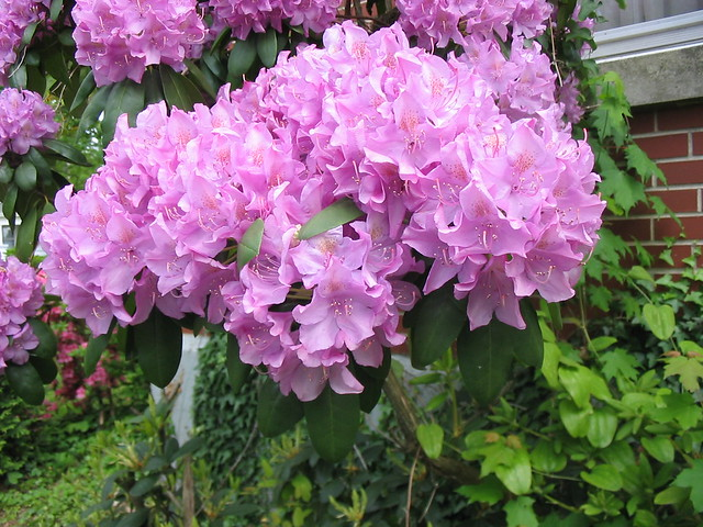 Personals in rhododendron oregon